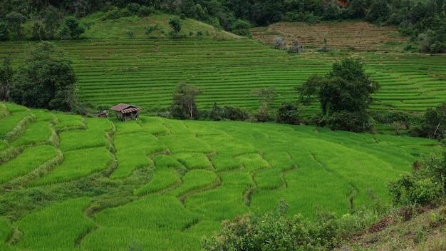 치앙마이 주 매 채엠 지역의 산에있는 계단식 논에있는 집. 프리미엄 사진