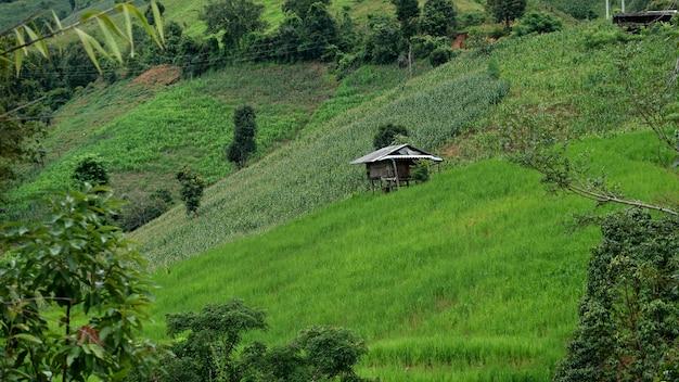 치앙마이 주 매 채엠 지역의 산에있는 계단식 논에있는 집.