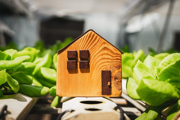 House model with fresh organic vegetable grown using hydroponic farming