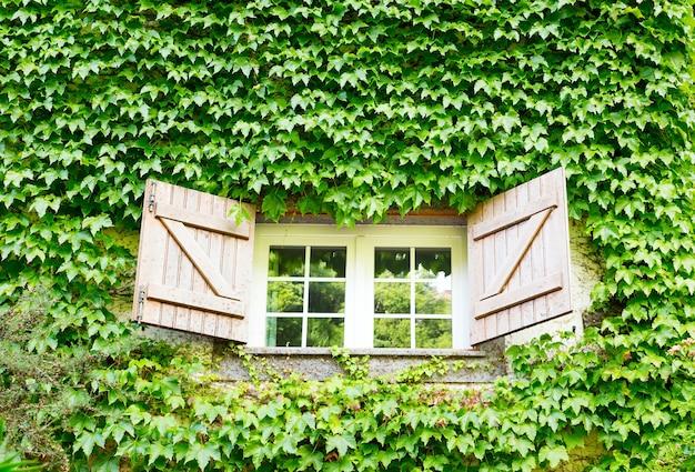 ツタが生い茂った家