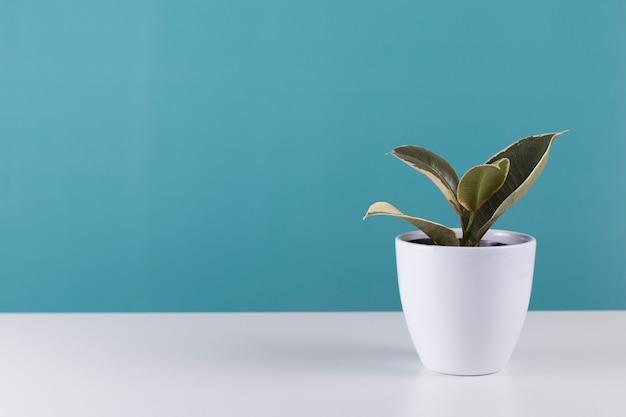 House plant on blue