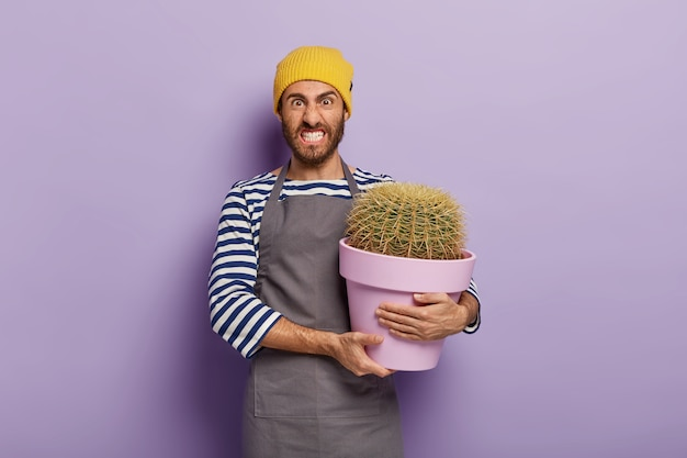 House plant care concept. displeased male gardener holds big pot with green cactus