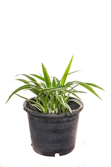House plant potted plant on white background.