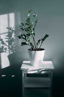 House plant and shadow of flowers in the living room