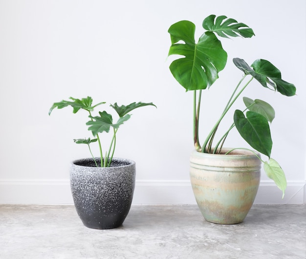 House plants in modern  container on cement floor natural air purify with monstera and philodendron selloum