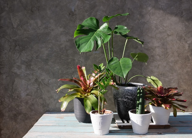 House plants in modern stylish container  wood table with concrete wall surface air purify with monsteraphilodendron selloum aroid palmzamioculcas zamifoliaficus lyratabromeliad in sun light