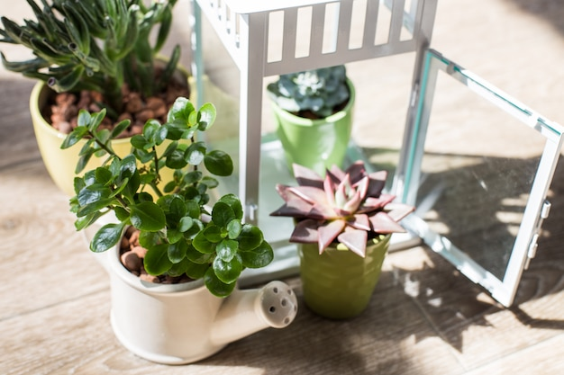 House plants. succulents