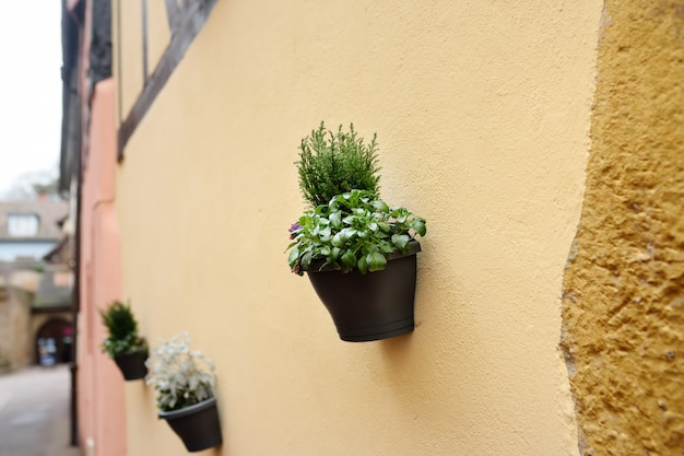 House wall in a medieval city decorated with flower pots with natural plants