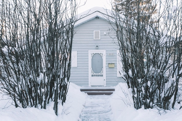 House with bushes in winter