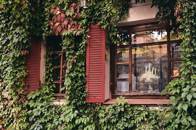 장식용 담쟁이 외관이 있는 집. 집의 벽은 짙은 녹색 잎 아래에 숨겨져 있습니다.