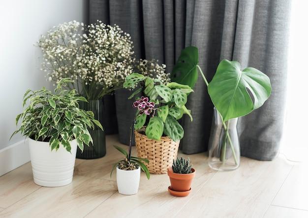 집에서 관엽식물. 바닥에 다른 집 식물
