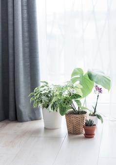 집에서 관엽 식물