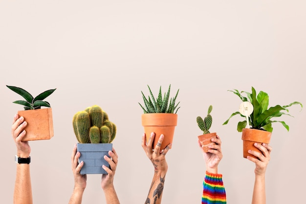 Houseplant background for plant lovers