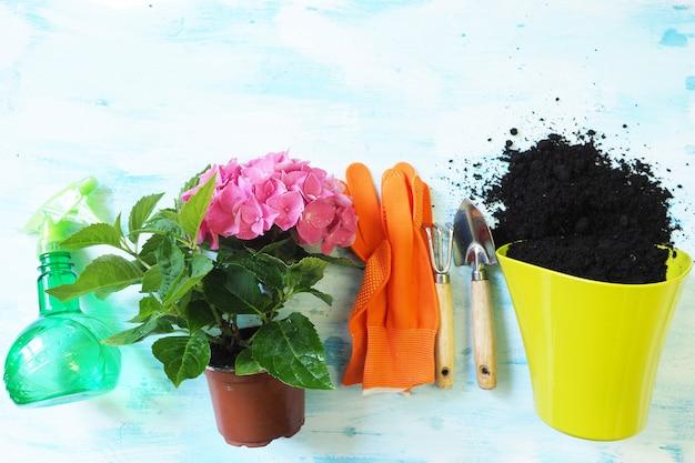 Houseplant blooms pink hydrangea, lime pot, orange gloves, garden shovel and rake and spray