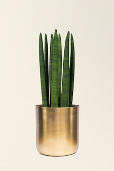 Houseplant in a brass plant pot