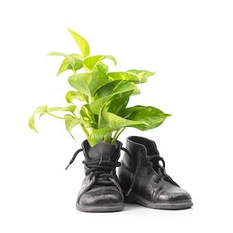 Houseplant in combat boots
