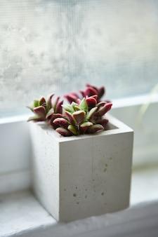 Houseplant in a concrete flowerpot on a window sill inside a room