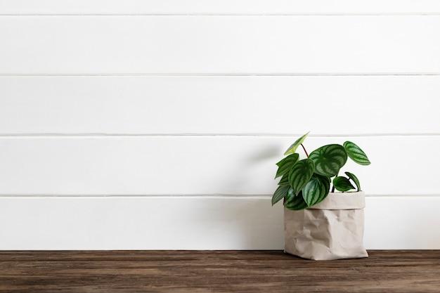 Servizio di consegna a domicilio di piante d'appartamento