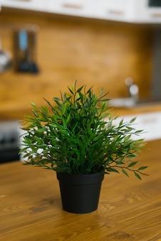 家の内部に黒い鍋に観葉植物