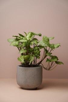 Комнатное растение в керамическом цветочном горшке на поверхности пастельных тонов с копией пространства, крупным планом.