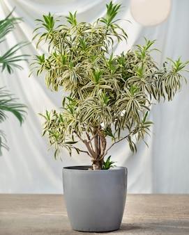 흰색 배경으로 냄비에 관엽 식물