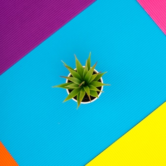 Houseplant in a pot on an abstract background of colored paper sheets