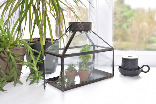 Houseplant and small greenhouse put on the edge of a window at home
