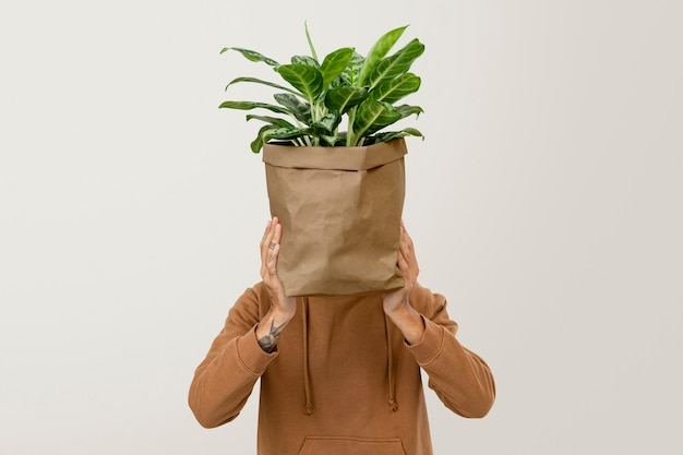 Houseplant in sustainable packaging plant delivery service
