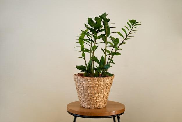 짚 화분에 녹색 잎을 가진 관엽 식물