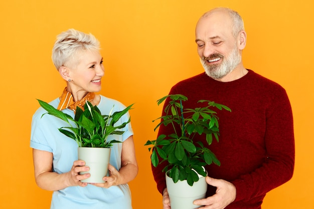 Houseplants, greenery and care concept. portrait of cute elderly married european couple happy woman and cheerful man posing isolated holding 2 pots with green plants, nursing them together