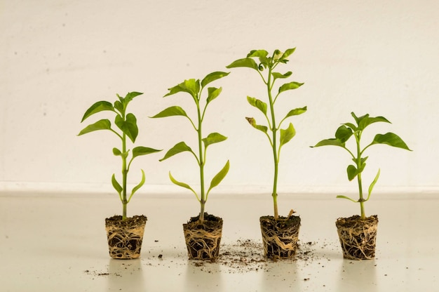 部屋の中で隣同士に育つ観葉植物