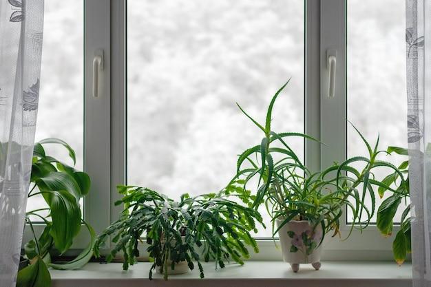 Комнатные растения, растущие на подоконнике в зимний сезон на фоне деревьев в снегу за окном