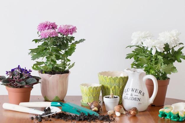 テーブルの上の鍋の観葉植物