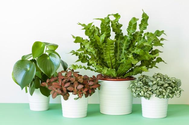 Комнатные растения в вазоне