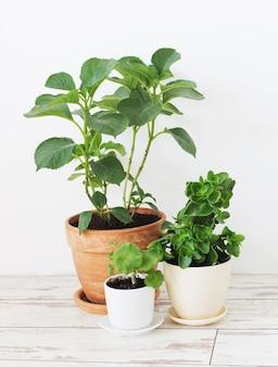 Комнатные растения в горшках на белом деревянном полу на фоне белой стены