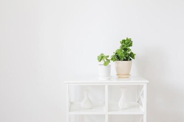 Комнатные растения в горшках на белой деревянной полке на фоне белой стены