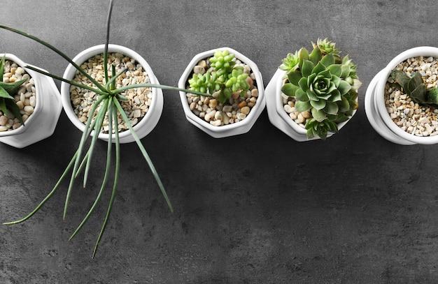 灰色の背景に観葉植物