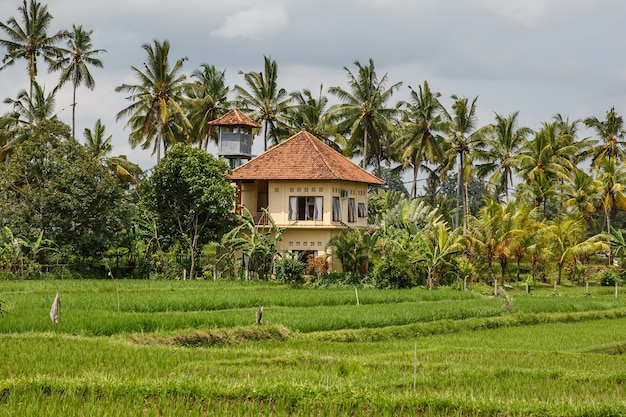Houses in the jungle. bali landscape.