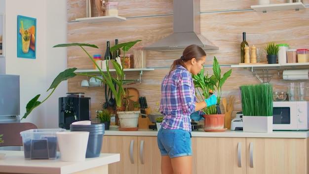 手袋とシャベルを使用して自宅のキッチンでガーデニングをする主婦。肥沃な土壌の白いセラミック植木鉢と家の装飾のために植え替えるために準備された植物。