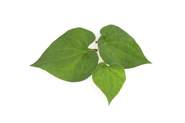 Houttuyniacordataまたはplukaowの枝の緑の葉は、白い背景で隔離されます。上面図、フラットレイ。