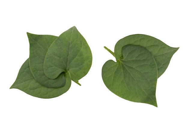 Houttuyniacordataまたはplukaow緑の葉が白い背景に分離され、クリッピングパスがあります。