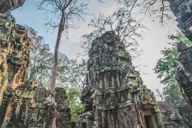 巨大なガジュマルの木古代アンコールワット遺跡パノラマ日の出アジアシェムリアップカンボジア