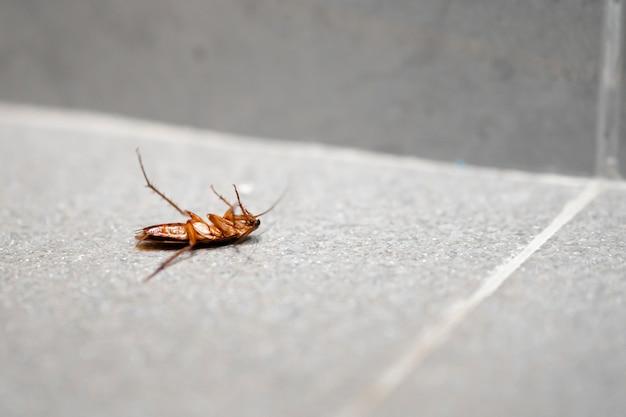 A huge cockroach on the floor.