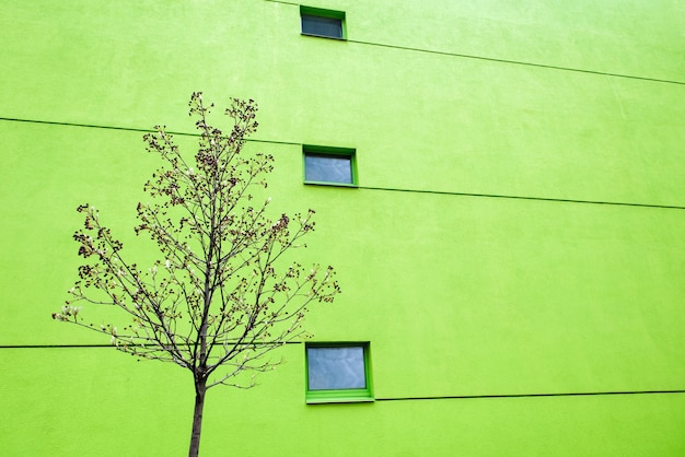 Huge green wall on modern building with two windows and lines. reflections in windows. copy space
