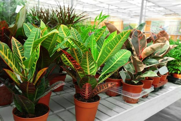 花や植物がたくさん売られている巨大な温室