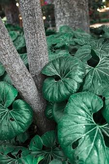 木の幹の近くの巨大な葉