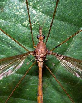 Огромный комар сидит на листе дерева