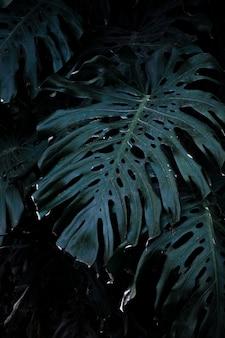 Huge plant leaves in garden