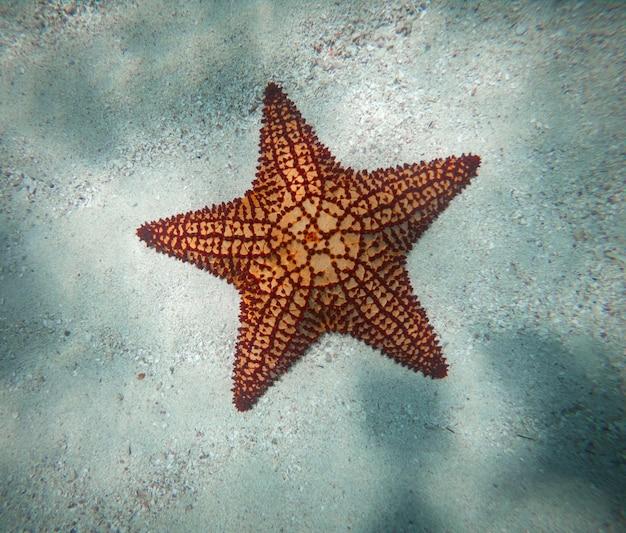 휴가 직업과 휴식의 모래 개념에 거대한 붉은 불가사리 수중