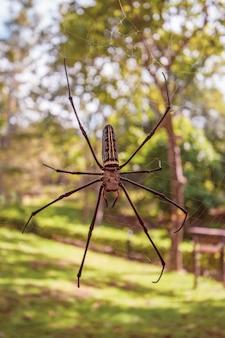 ウェブ上の巨大なクモのクローズアップ